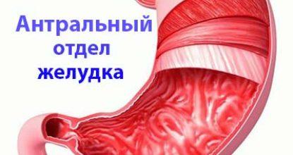 Где находится антральный отдел желудка?