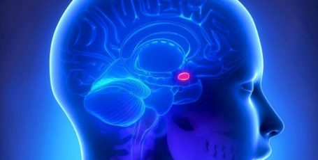 Микроаденома гипофиза головного мозга: причины, симптомы, опасность и лечение